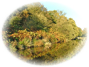 The banks of the canal in the Colne Valley resplendent in their early autumnal colours