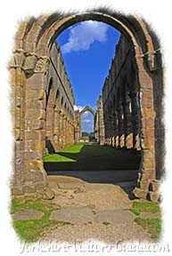 Yorkshire History - Picture of the knave at Fountains Abbey - click the picture to visit Fountains Abbey